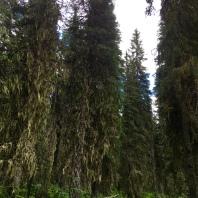 Cedars - find my friend!