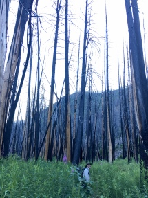 The West Fork of Fish Creek burned in 2015.