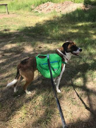 Pauli, the trail dog. Photo: Tobin Miller Shearer