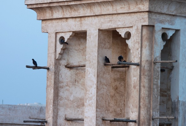 Pigeons roosting in a tower