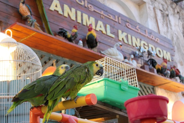 parrots and sign that says Animal Kingdom