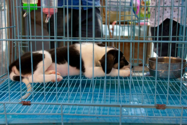 Puppy in a cage at a pet market